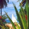 Barbados Cactus and Sailboat Enhanced - Oil
