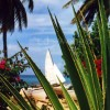 Barbados Cactus and Sailboat