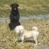 Buddy & Sonnie on Pebbly Beach