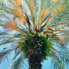 Coconut Grove Palm