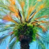 Coconut Grove Palm Enhanced