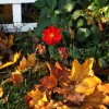 Dahlia and Fall Leaves