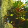 Greenhouse Moss