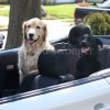 Mack and Buddy in Convertible