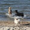 Mack, Buddy and Sonnie at Lake Winnipesaukee