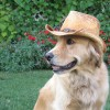Mack Wearing a Cowboy Hat