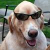 Mack Wearing Sunglasses