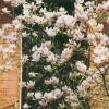 Magnolias in Doorway
