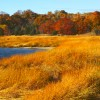 Manhasset Bay Wetlands #1