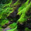 Mossy Rocks, Bushkill Falls
