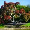 Old Westbury Gardens Tree