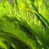 Plant Fronds Enhanced