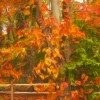 Rail Fence and Fall Leaves Enhanced