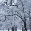 Snowy Trees #2