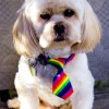 Sonnie's Rainbow Tie