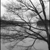 Bare Tree and Lake - Black & White