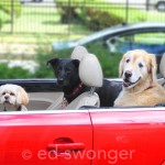 3 Dogs and a Convertible