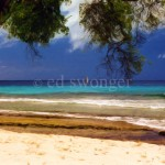 Barbados Beach and Tree Enhanced