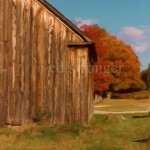 Barn and Fall Tree Enhanced