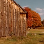 Barn and Fall Tree