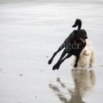 Buddy in Air at Beach