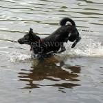 Buddy Jumping in Lake