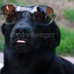 Buddy Wearing Sunglasses