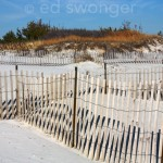 Dune and Fences