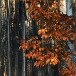 Leaves and Wooden Wall Closeup