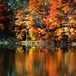 Fall Trees Reflection