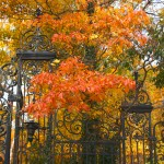 Gate and Fall Leaves
