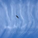 Hawk & Clouds