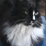 Louie Closeup