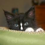 Louie in Cat Bed #1