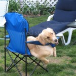 Mack in Blue Chair