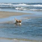 Mack at Lido Beach