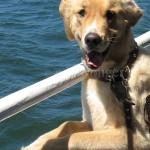 Mack on Ferry