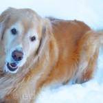 Mack in Snow 2014