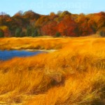 Manhasset Bay Wetlands #1 Enhanced