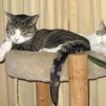 Manny and Jamie Asleep on Cat Tree