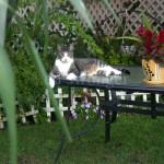 Manny on Garden Table