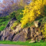 Fort Tryon Park Forsythia Enhanced