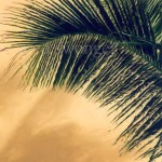 Palm Frond Enhanced