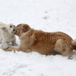 Sonnie and Mack Playing in Snow