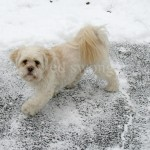 Sonnie on Snowy Pavement