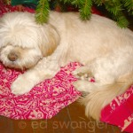 Sonnie Under the Christmas Tree