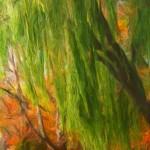Weeping Willow & Fall Trees Enhanced