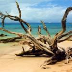 Barbados - Drifting