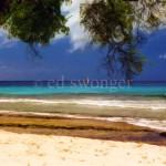 Barbados Beach, Tree and Sailboat